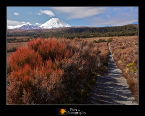 Tongariro National Park XI