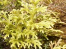 Great Barrier Island flora
