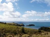 Great Barrier Island 9