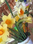 Daffodils in table display