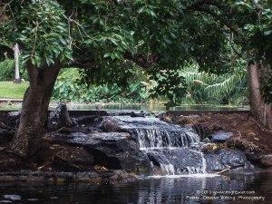 Brisbane Botanical Gardens, Australia