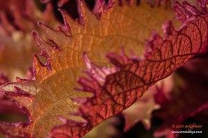 colourful-leaf