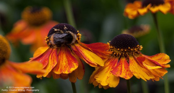 bee-on-orange-flower