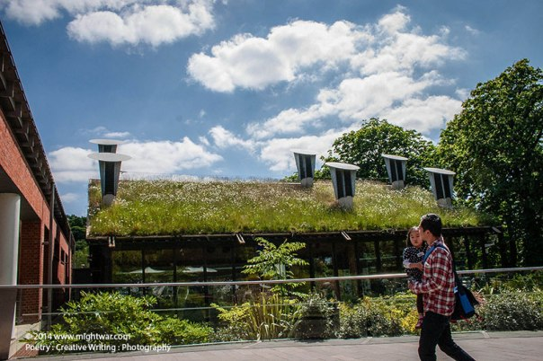 Horniman-Museum-roof-meadow