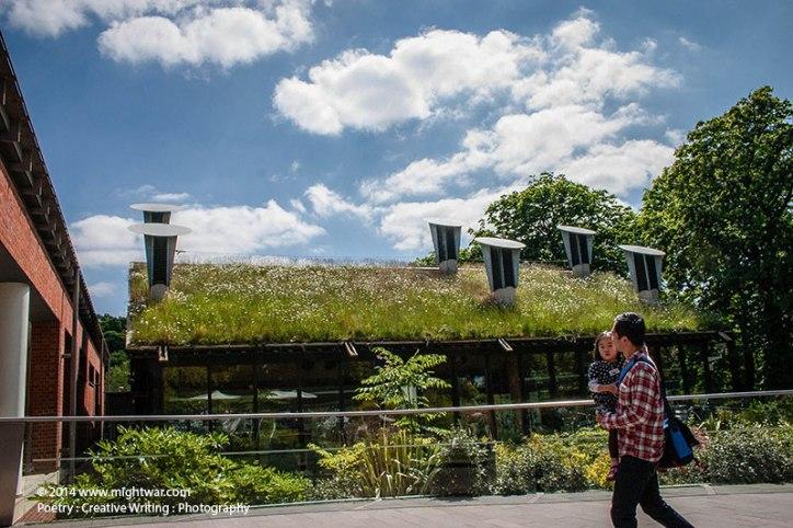 Horniman-Museum-roof-meadow